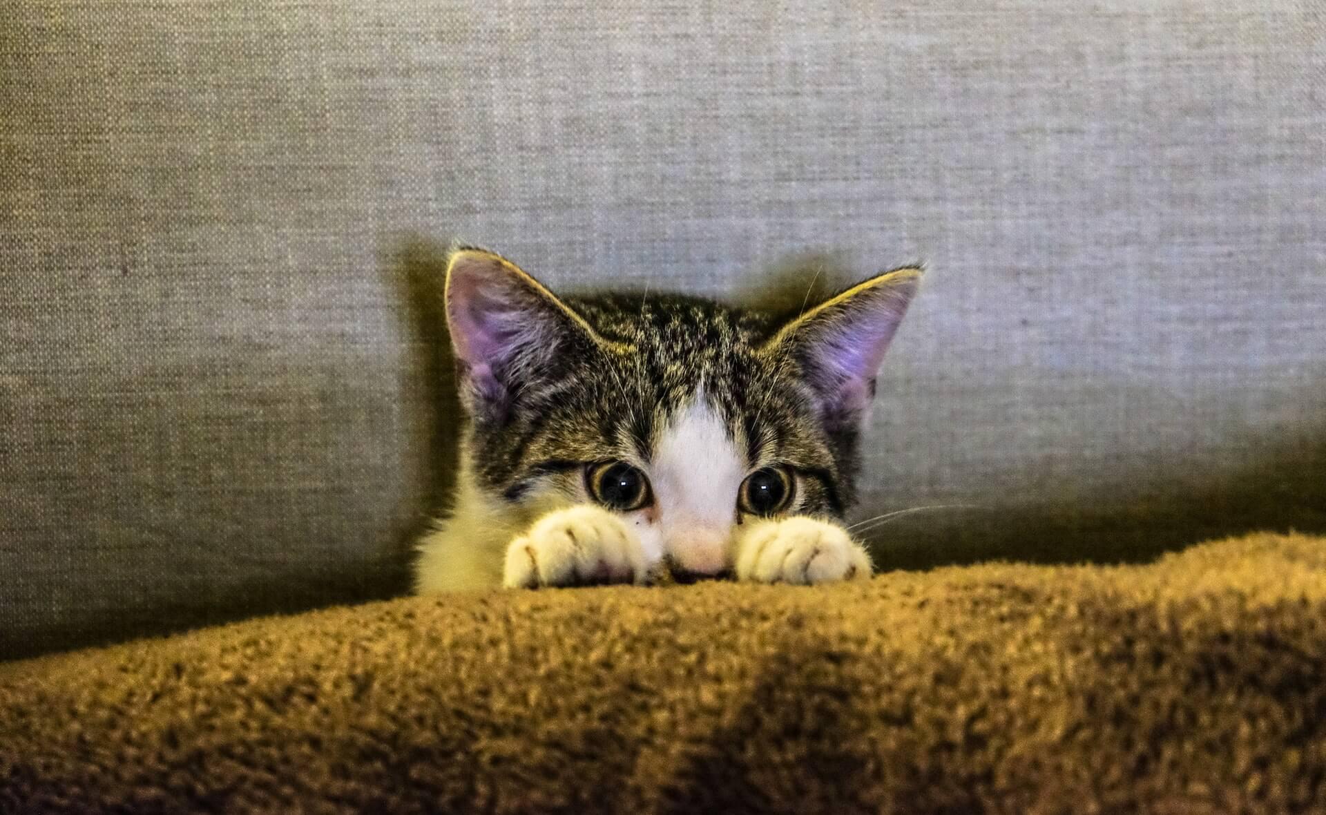 Impfung Gegen Katzenallergie